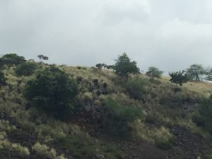 Hillside of Lekeleke where ancient bodies rest in peace